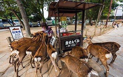 Nara deer - UNESCO sites