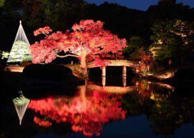 Park Illuminations in Tokyo